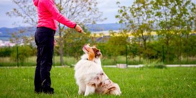 Quali sono i comandi da insegnare al cane quando è cucciolo?