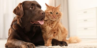 How to become a foster family for an animal