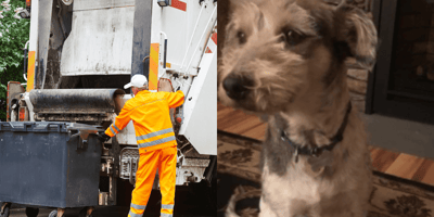Owner sees trash collectors with her dog: As she gets closer, tears start to flow