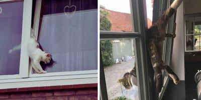 Weer kat vast in kantelraam - deze keer liep het goed af