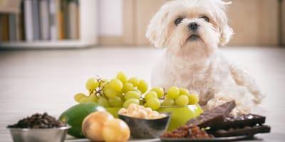 Estos alimentos son tóxicos y mortales para los perros