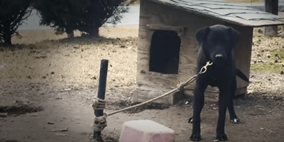 Dog tied to a post: Woman makes a radical decision after speaking to the owners
