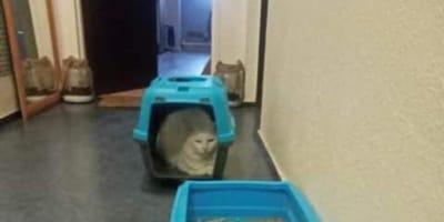 Nachbarin findet verängstigte Katze: Was dahintersteckt, schockiert