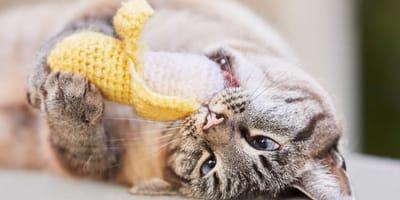 ¿Los gatos pueden comer plátano?