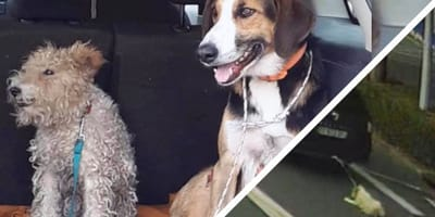 """Man sleept honden 700 meter mee achter auto:  """"hij wist het niet"""""""