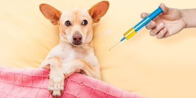 Metamizol sódico para perros: usos, dosis, precio y efectos secundarios
