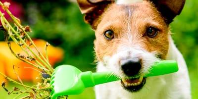 11 piante velenose per cani: quali sono e cosa fare?