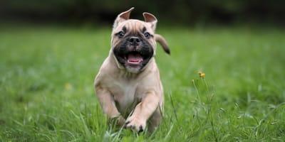 Geweldige hondennamen: laat je inspireren door beroemde viervoeters