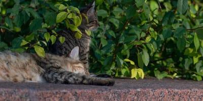 Mysterieuze dood van katten in Rotterdam: wat is hier aan de hand?