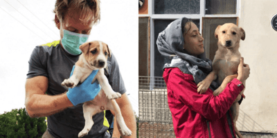 New hope for Pen Farthing's shelter staff and 200 animals to evacuate Afghanistan