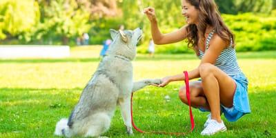 Quali gesti usare per educare il cane?