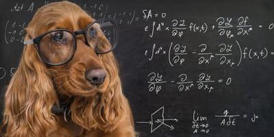 10 cosas que los perros nos enseñan