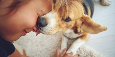 Tu primer perro en casa: guía para principiantes