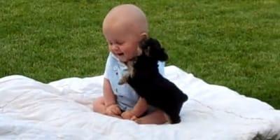 El vídeo más tierno de la semana: yorkshire y bebé jugando juntos en el parque
