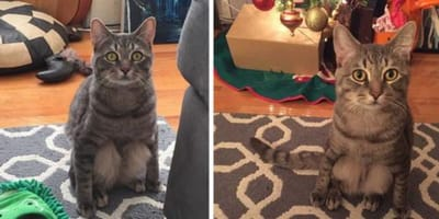 A couple adopts a stray cat and realise that this one has a strange peculiarity