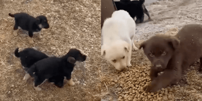 After dropping puppies off at shelter, man starts to have doubts and turns back