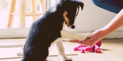 Come fare il test per l'imprinting del cane?