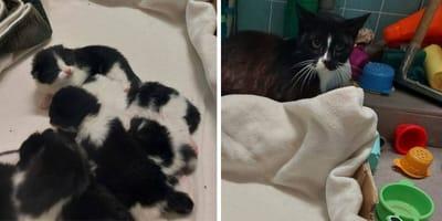 Mama met baby's gedumpt in Rijsenhout