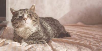 Gatos ancianos: las 7 enfermedades más comunes que padecen