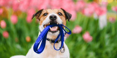 What is the best lead for a dog?