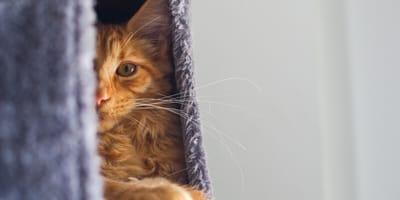 Zachowanie kota przed śmiercią – jak poznać, że kot odchodzi?