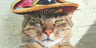 5 Formas de decir 'gato' en México: ¿te la sabes todas?