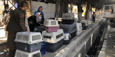 Attempt to flee Kabul takes a devastating turn for Nowzad staff and animals