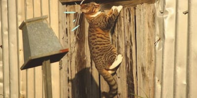 Il trucco infallibile affinché il gatto non scappi dal giardino (Foto)