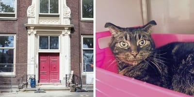 Kat zat ruim 1, 5 maand eenzaam opgesloten in een huis in Schiedam