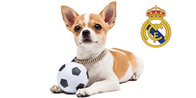 Nombres para perros inspirados en los jugadores del Real Madrid