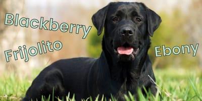 Nombres para perro negro: las ideas más bonitas y originales