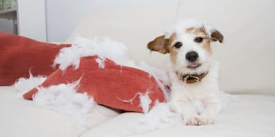 Jak oduczyć psa gryzienia? Wyjaśniamy krok po kroku