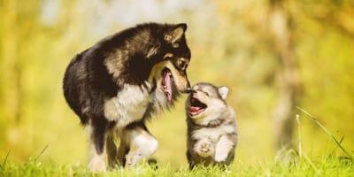 Come abituare il cucciolo di cane agli altri animali?