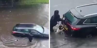 Dzielny springer spaniel pomaga opiekunce pchać auto po zalanej ulicy: video podbija sieć