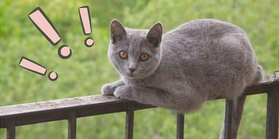 Cómo evitar que mi gato se caiga del balcón