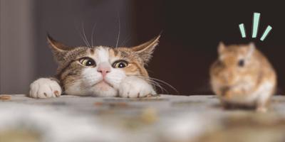 Por qué mi gato trae ratones vivos a la casa y cómo lograr que deje de hacerlo