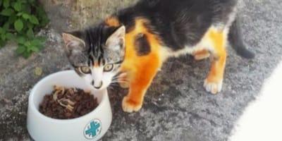 L'ENPA chiede il nostro aiuto per il gatto verniciato