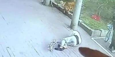 """Nieprawdopodobne: kot spada """"z nieba"""" prosto na głowę przechodnia, mężczyzna traci przytomność (VIDEO)"""