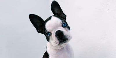 Hond Daphne heeft een bijzonder 'gebrek' waardoor niemand haar wil adopteren