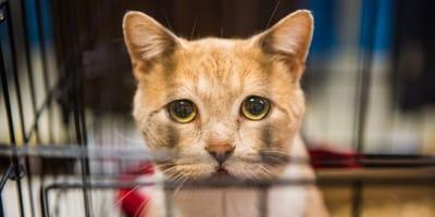 Liebenswerte Vierbeiner mit Handicap: Ataxie-Katzen