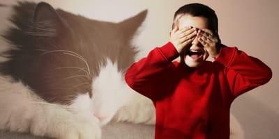 Ailurofobia - jak sobie radzić z lękiem przed kotami?