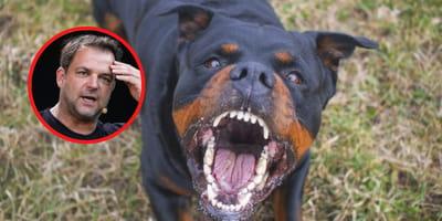 """Rottweiler video's viraal op TikTok: """"onsmakelijk en hond onwaardig"""""""