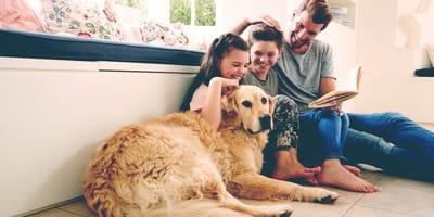I benefici apportati dai cani in quanto animali da compagnia