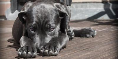 Abandonan a su perrito en Torreón: él se sienta a esperar a que vuelvan