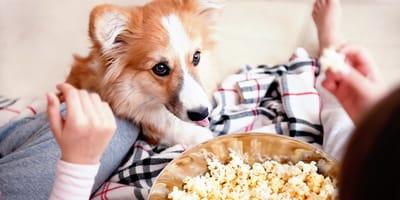 ¿Los perros pueden comer palomitas o les hacen daño?