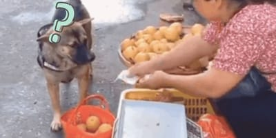 Cagnolino va al mercato e contratta finché non ottiene quello che vuole (Video)
