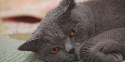 Quali sono i sintomi di un gatto disidratato? E cosa fare?