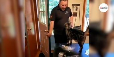 Vídeo: gato tiene la reacción más bella del mundo cuando su dueño vuelve a casa del trabajo