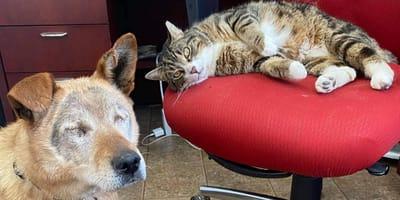 """Miłość jest ślepa. Bezdomny, niewidomy pies znalazł """"psa"""" przewodnika w... kocie (VIDEO)"""