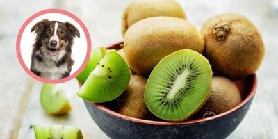 Czy pies może jeść kiwi?